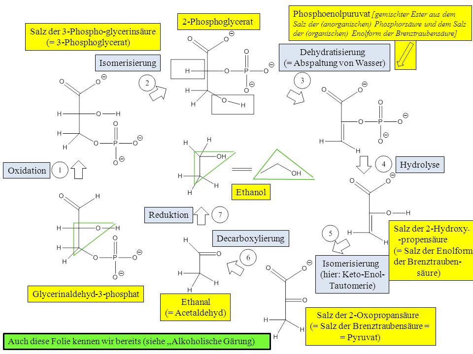 Phosphoenolpuruvat [gemischter Ester aus dem Salz der (anorganischen) Phosphorsäure und dem Salz der (organischen) Enolform der Brenztraubensäure]